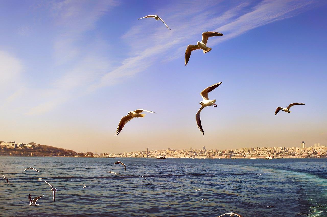 sea_birds_seagull_detector_xeoma_business_optimization_tool_artificial_intellegence